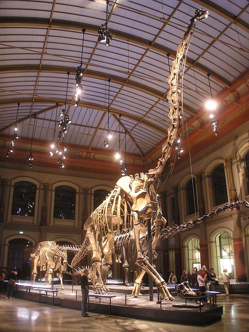 800px-Naturkundemuseum_Brachiosaurus_brancai