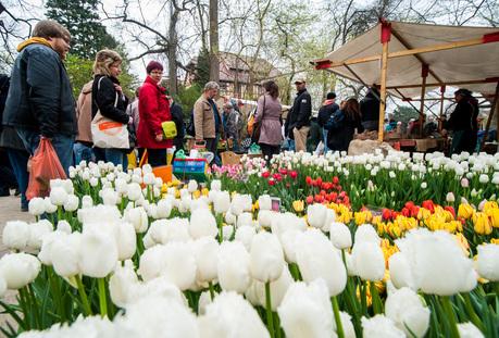 Besucher schauen sich am 05.04.2014 beim Berliner Staudenmarkt im Botanischen Garten Hyazinthen an. Foto: Hauke-Christian Dittrich/dpa +++(c) dpa - Bildfunk+++